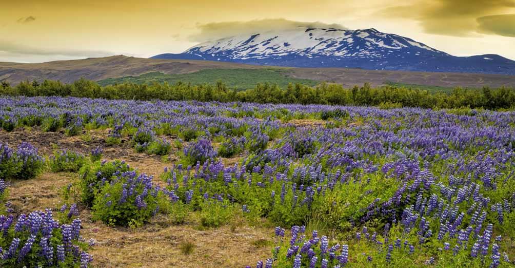 Ferien in Island: die besten Tipps